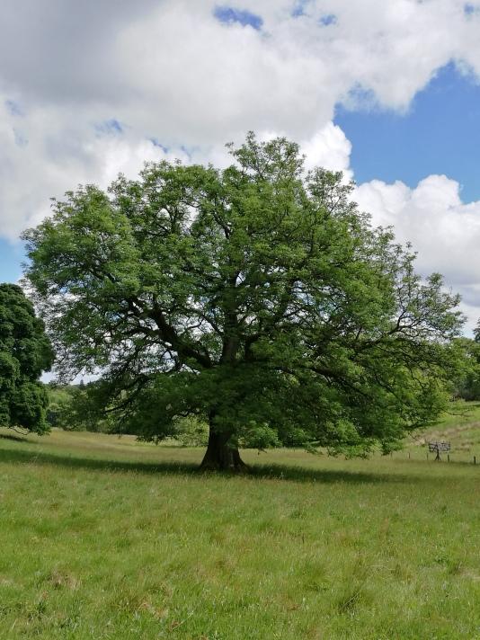 Extremely photogenic tree.