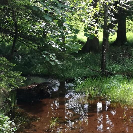 An exceedingly calm stream.